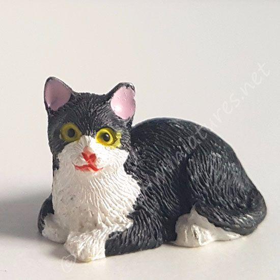 Black and White Cat - B