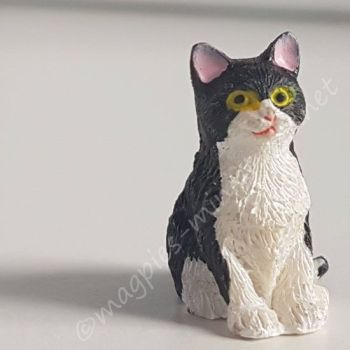 Black and White Cat - E