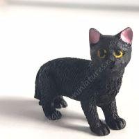 Black Cat - C