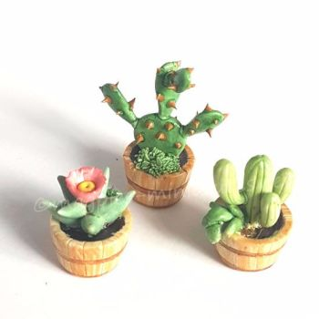 3 Piece Cactus set