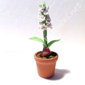 WHITE POTTED HYACINTH -CLAY