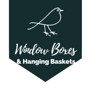 Window Boxes & Hanging Baskets