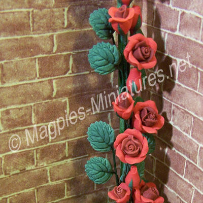 Climbing Roses - Red