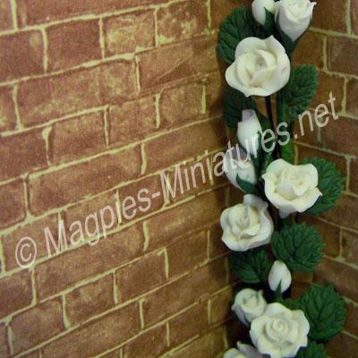 Climbing Roses - White