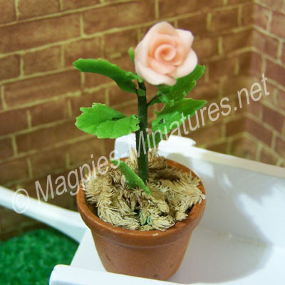 Single Flower - Pink Rose