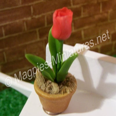 Single Flower - Red tulip