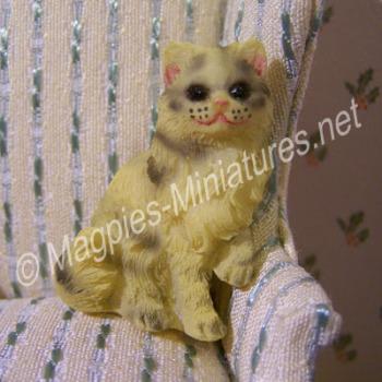 Tabby Coloured Cat