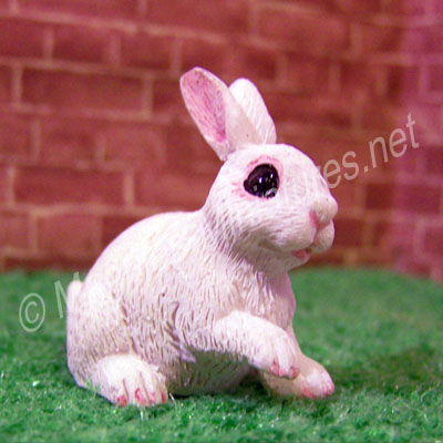 Rabbit -A