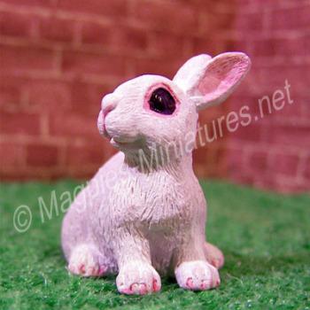 Rabbit -D
