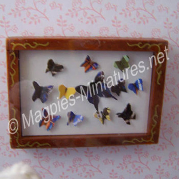 Picture - Butterfly Display Box