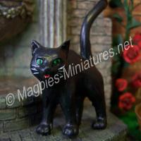 Black Cat standing