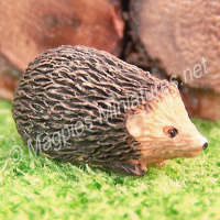 Hedgehog - Various poses