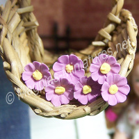 Set Of 6 Single Daisies Mauve