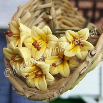 Set Of 6 Singles Lilies Yellow