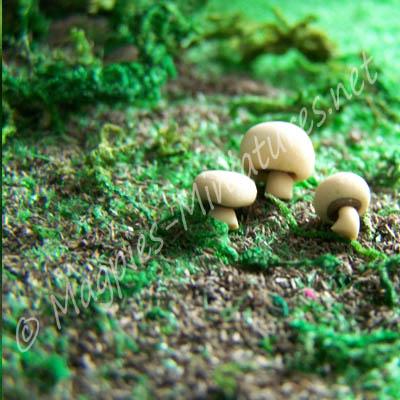 Mushrooms - set of 3