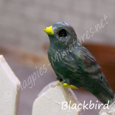 ga249 garden bird - blackbird