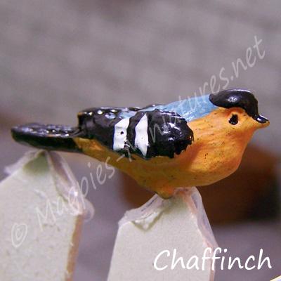 ga249 garden bird - chaffinch