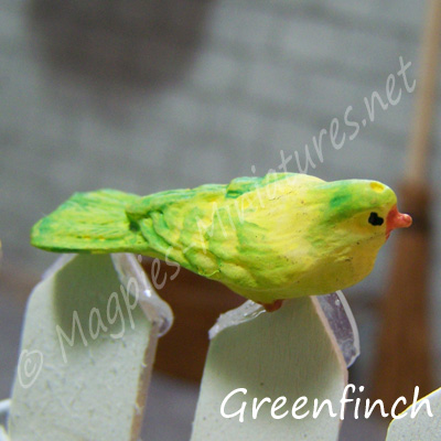 ga249 garden bird - greenfinch