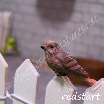 ga249 garden bird - redstart