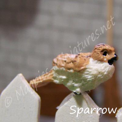 ga249 garden bird - sparrow