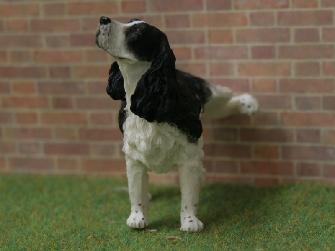 Black Springer Spaniel - Naughty Dog