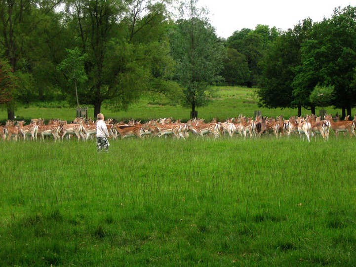 Richmond Park in London