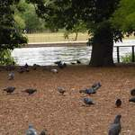 osterley-park-london-pic-13