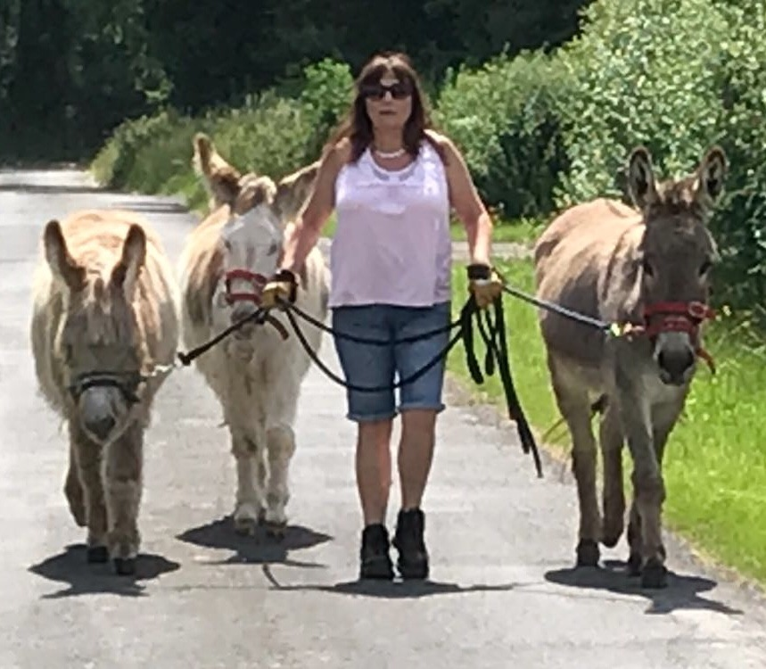 The donkeys owner achieved  her dream of walking all 3 of her  young donkeys out together, all behaving nicely.