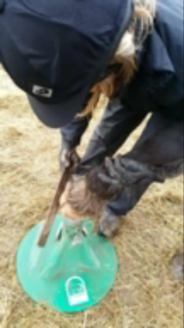 Training  a horse to overcome her fear of the farrier , now she is very confident and trusts having her feet trimmed.