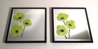 Lime Poppy Trio Picture