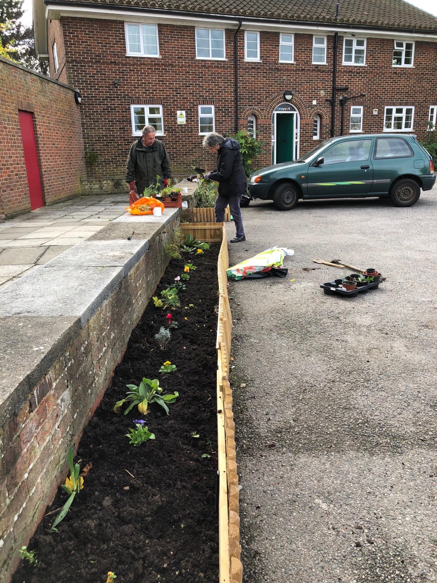 New planting 3