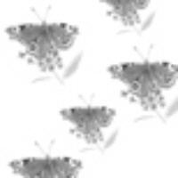 Patterned Vellum - Butterfly - White