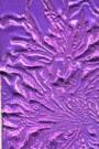 Moon Glow - Imperial Crown Purple Gold