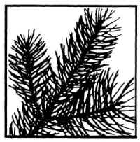 Stamp Oasis Evergreen Rubber Stamp