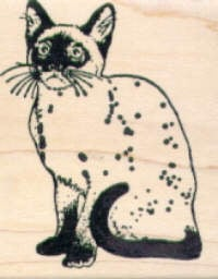 Magenta - Cat