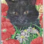 Dufex Picture Prints Black Cat