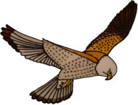 691 - Falcon - Handmade peelable static window cling decoration