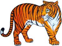 556 - Tiger - Handmade peelable static window cling decoration