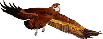 1307 - Eagle
