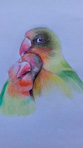RA Chambers Lovebirds col pencils