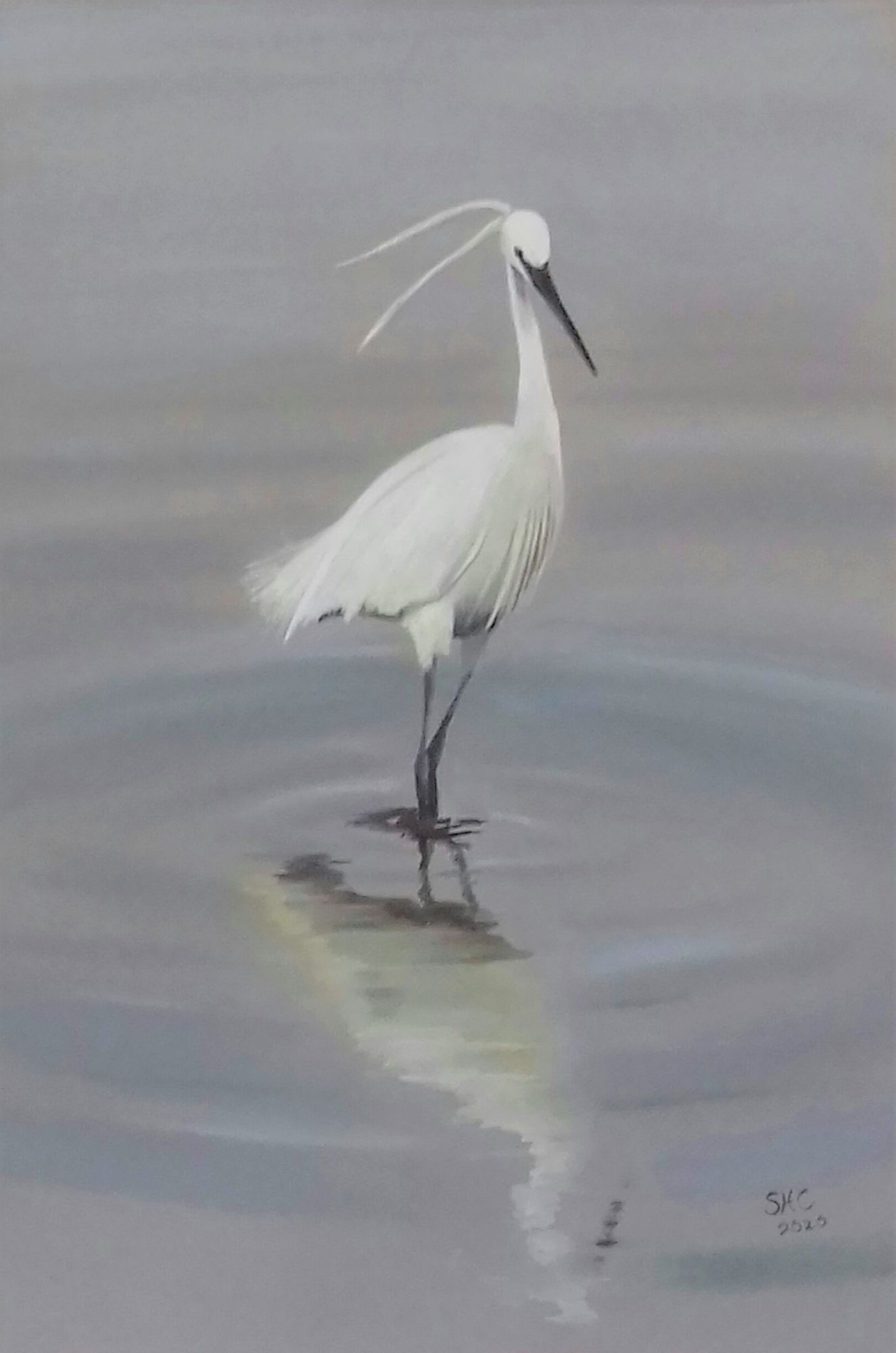 Little Egret   ________________________________ pastel and gouache on Daler Murano coloured paper (40cm x 30cm)    NFS