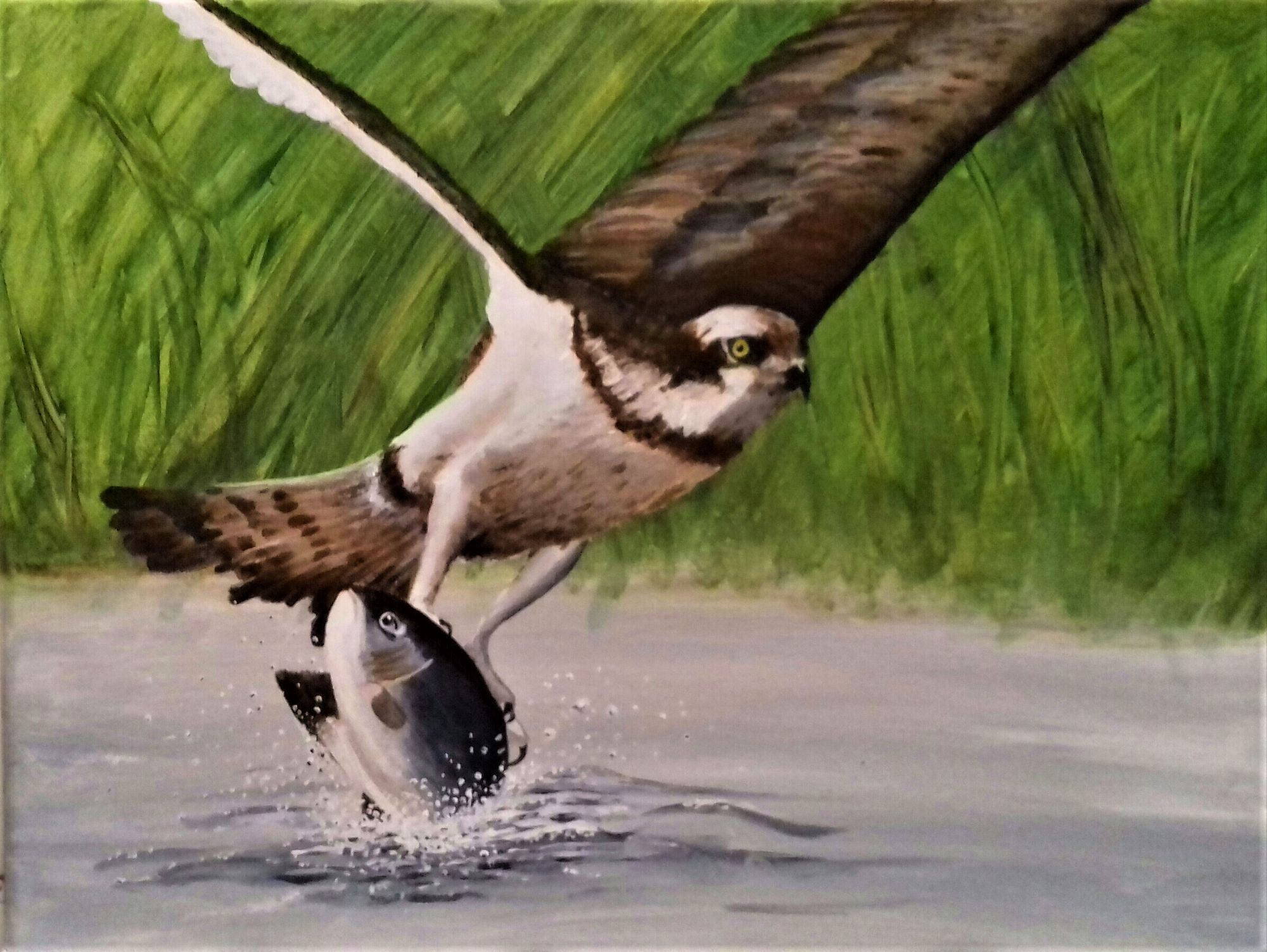 Osprey   ________________________________ acrylic on stretched canvas  (40cm x 30cm x 2.5cm)           £30