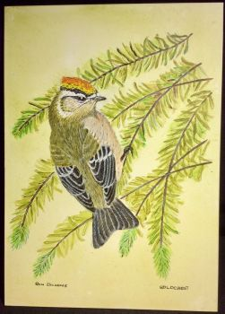 RA2 Dickens, Ron Goldcrest (acrylic)