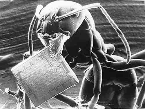 An ant with a microchip, now small enough to be implanted through vaccinati