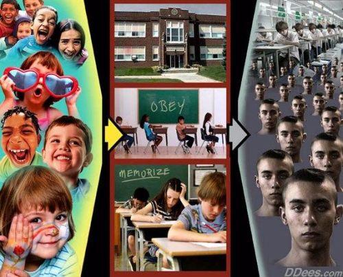 schooling-by-david-dees