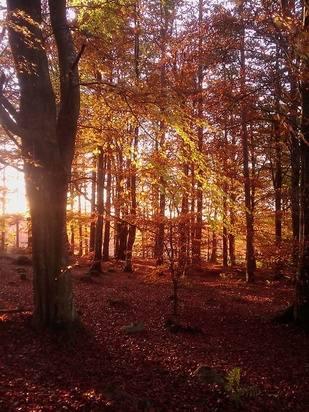 Kemnay Autumn