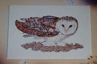 Nesting Barn Owl ~ Cross Stitch Chart