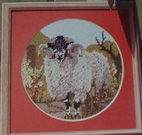 Dalesbred Sheep ~ Needlepoint Chart