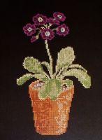 Auricula in a Terracotta Pot ~ Cross Stitch Chart