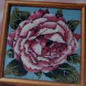 English Rose in Bloom ~ Needlepoint Pattern